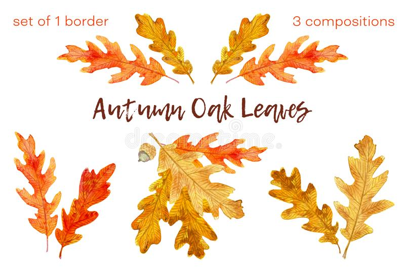 Watercolor autumn oak leaves set. 1 border and 3 compositions. Set of hand drawn watercolor elements on white background. Beautiful red, orange, golden and brown stock illustration