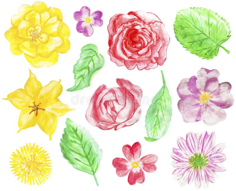 Set of hand drawn watercolor flowers and leaves royalty free illustration