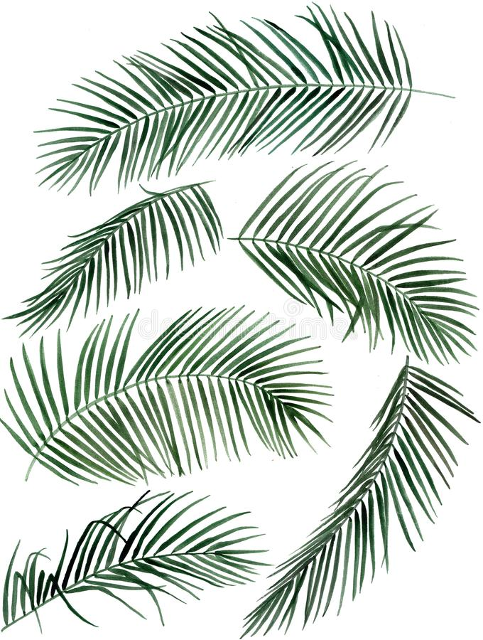 Hand drawn watercolor palm leaves illustration stock photo