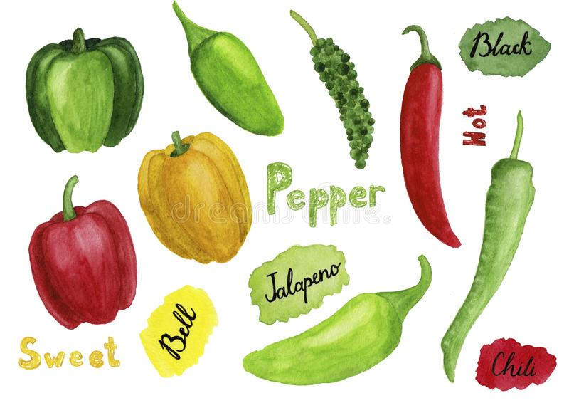 Set of hand drawn watercolor peppers vector illustration