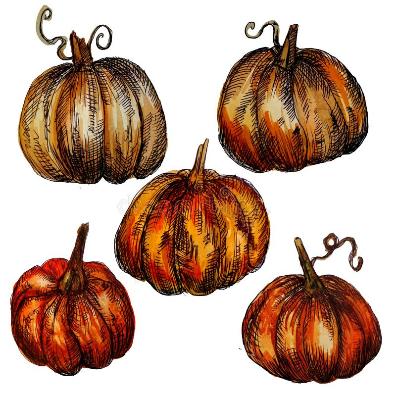 Set of hand-drawn watercolor pumpkins. It is the perfect for card Thanksgiving Day, Halloween,recepi menu.Isolated white. Background, autumn, october vector illustration