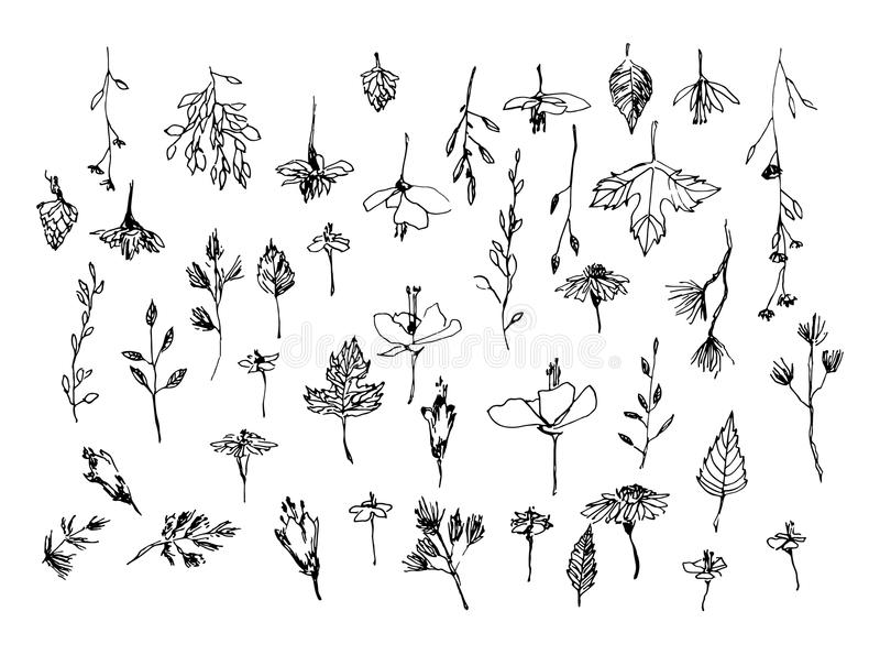 Set of hand drawn weed field herbs, flowers, leaves. Outline of plants. Sketch or doodle vector illustration. Black image on whit royalty free illustration