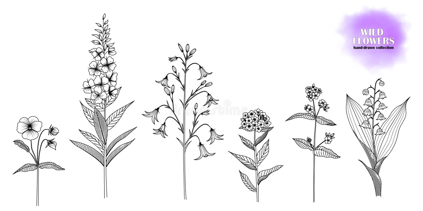 Set of hand-drawn wild flowers. vector illustration