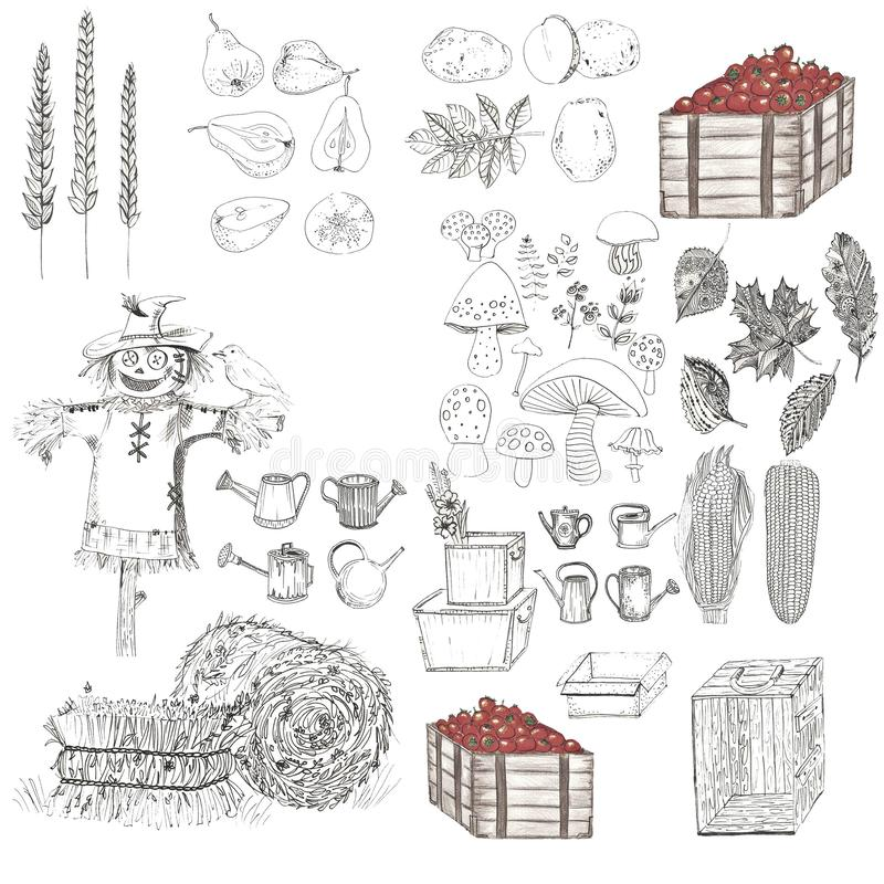 Set of harvest elements in black-white colors. On a white background stock illustration