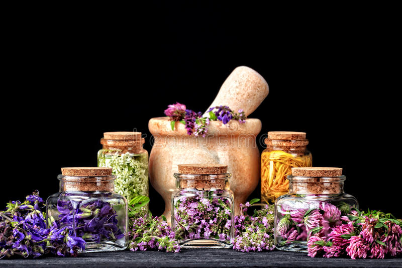 Set of healing herbs stock photography