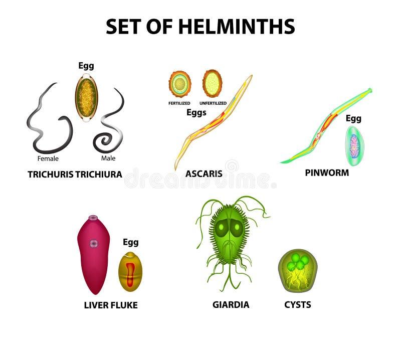 Pinworms és ascaris lamblia hogyan kell kezelni - oraoazis.hu