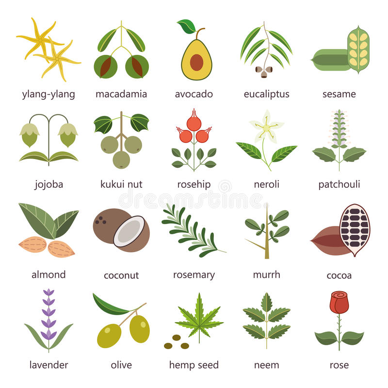 Set of herbs and plants color flat icons used in cosmetics and natural medicine. stock illustration