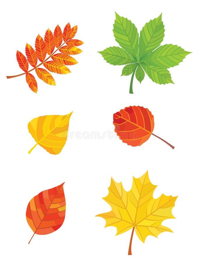 Set Herbstblätter stock abbildung