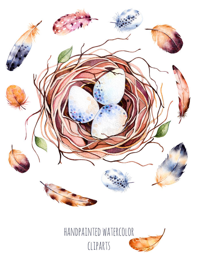 Set of high quality hand painted watercolor bird nest with eggs and feathers stock illustration
