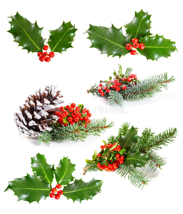 Set of Holly leaves and berries. With a pine branch on a white background stock image