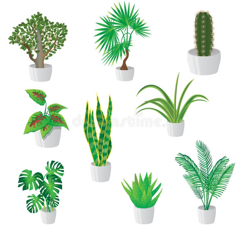 Set of homemade green plants in colorful pots isolated on white royalty free stock photos