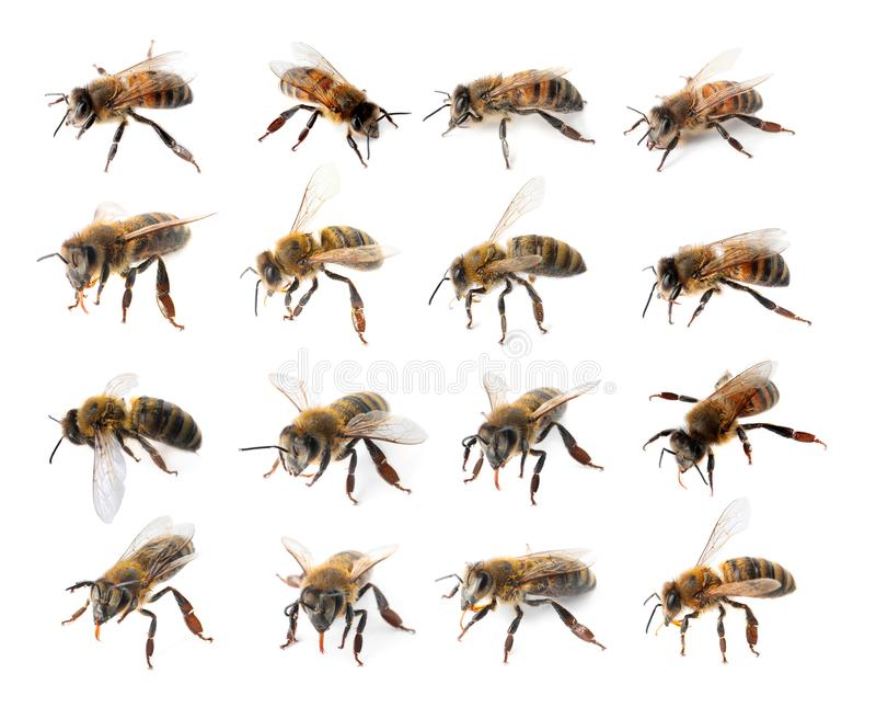 Set with honey bees royalty free stock images