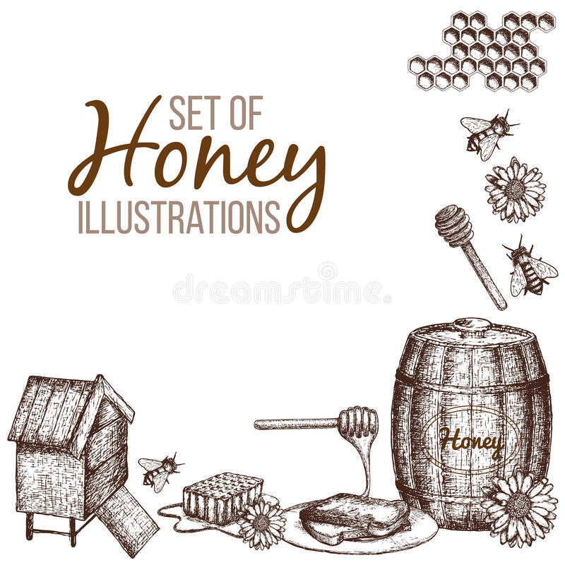 Set of honey sketch. Hand drawn ink sketch illustration, set of honey, organic nature products. Vector stock illustration