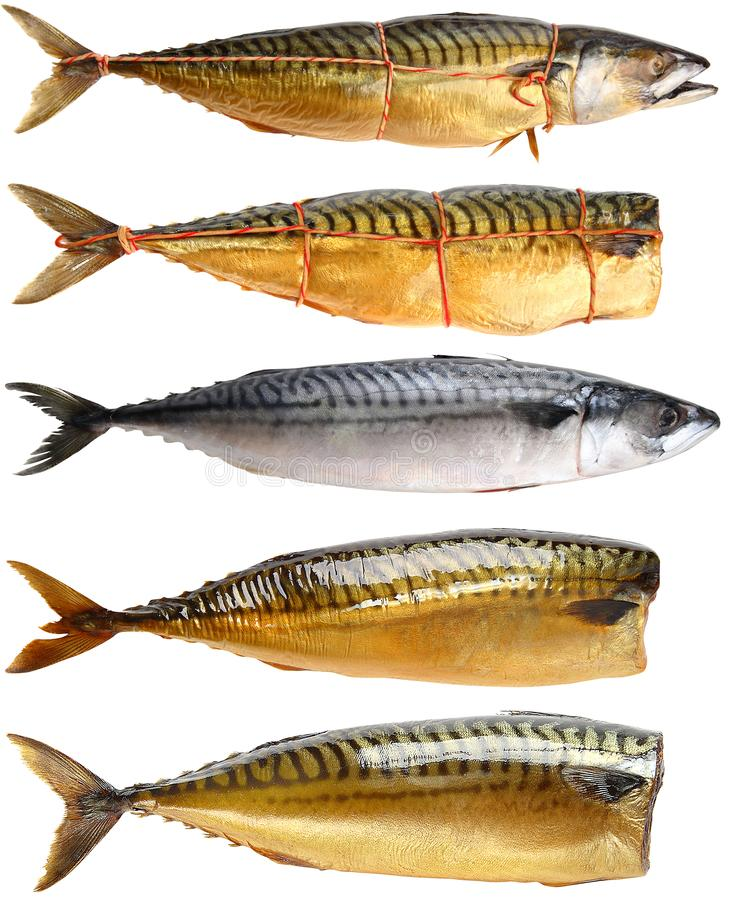 A selection of cooked mackerels. royalty free stock photography