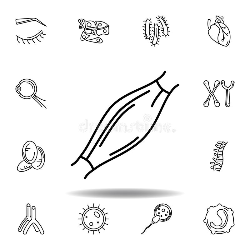 Set of human organs muscle outline icon. Signs and symbols can be used for web, logo, mobile app, UI, UX. On white background vector illustration