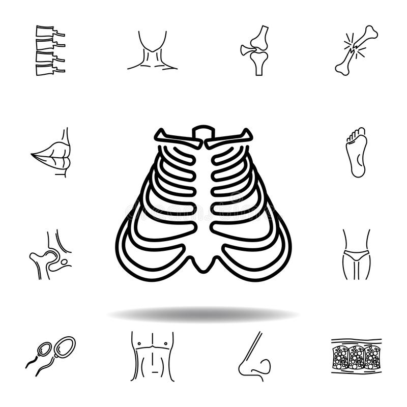 Set of human organs ribs outline icon. Signs and symbols can be used for web, logo, mobile app, UI, UX. On white background stock illustration