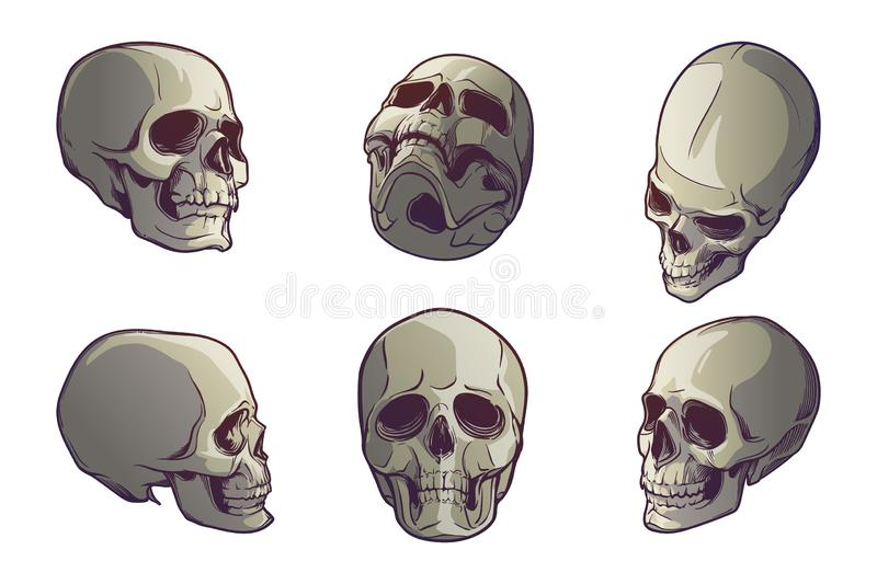 Set of 5 Human Skulls in various view angles. Linear drawing painted in 3 shades, isolated on white background. vector illustration