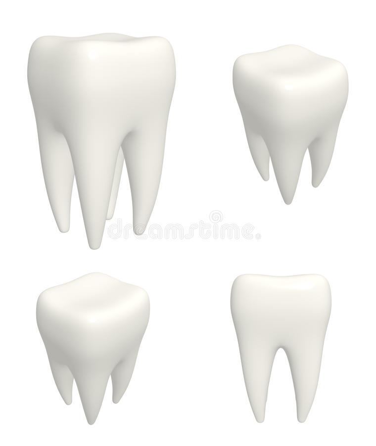 Set of human teeths 3d models. View from different angles. Collection of human teeths 3d models. View from different angles. Objects isolated on white background royalty free illustration
