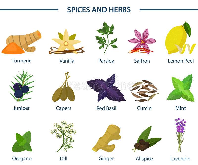 Set of icons of seasoning or spice on plates. Turmeric or tumeric, flat-leaved vanilla, orchid and parsley, saffron and lemon peel, juniper and capers, basil vector illustration