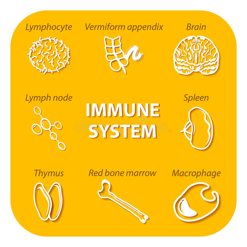 Set icons with shadow. Human Immune system stock illustration