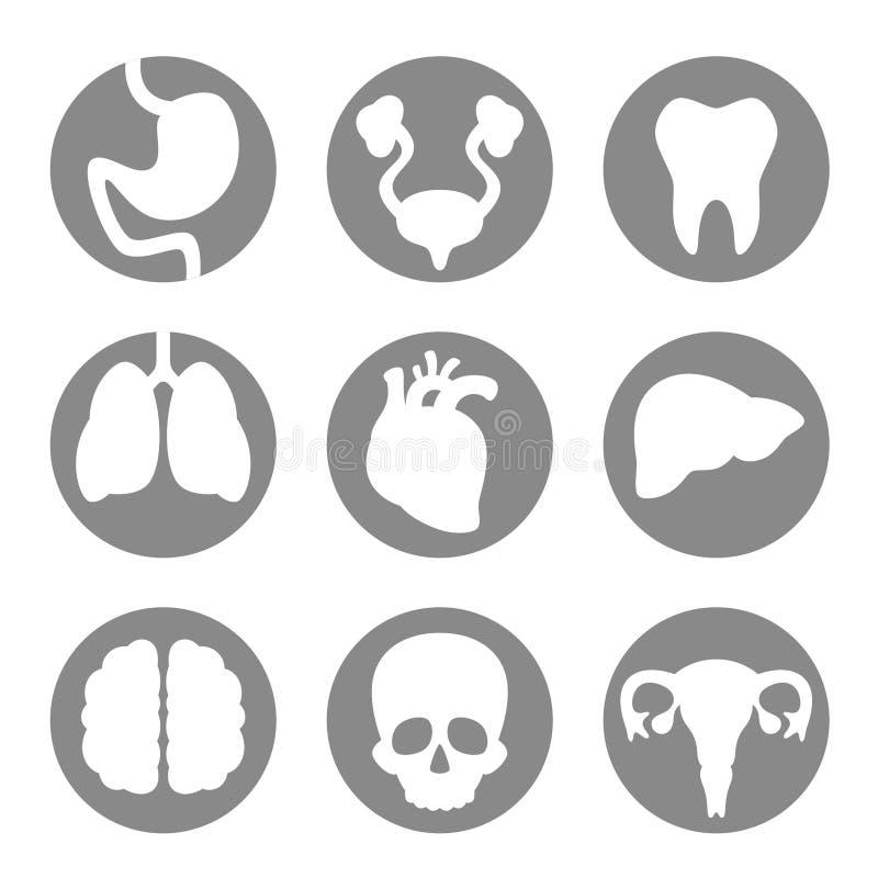 Set ikona wewnętrzni organy ilustracji