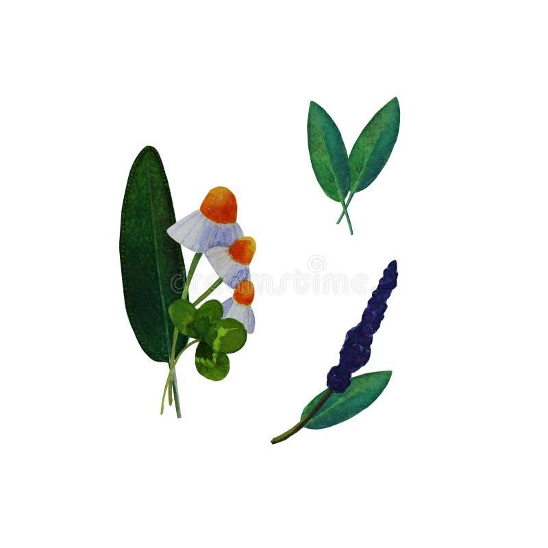 Set of illustrations of medicinal plants. Set of watercolor hand-drawn illustrations of medicinal plants. The set includes illustrations of  leaves and flowers royalty free illustration