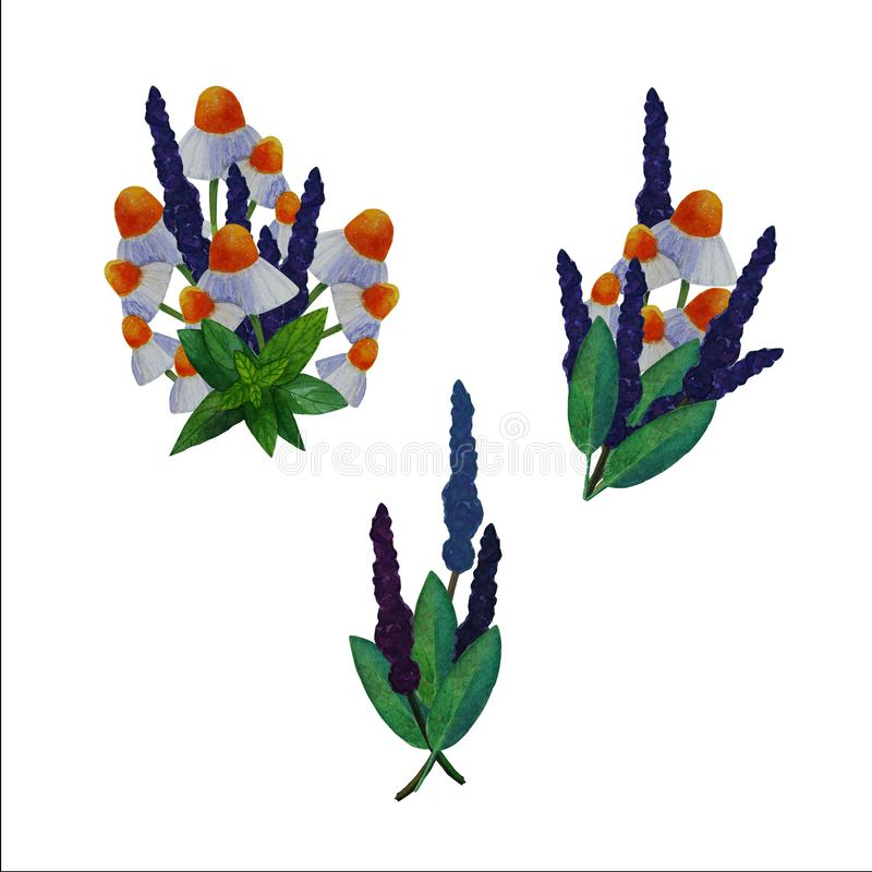 Set of illustrations of medicinal plants. Set of watercolor hand-drawn illustrations of medicinal plants. The set includes illustrations of leaves and flowers of vector illustration