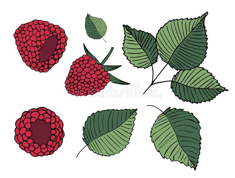 Set ilustracje malinki i liście, odosobnione na białym tle ilustracja wektor