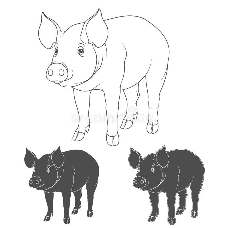 Set ilustracje przedstawia świnie royalty ilustracja