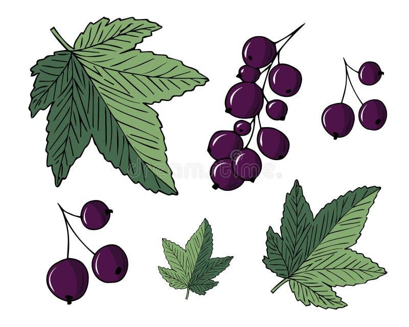 Set ilustracje rodzynek i liście odizolowywający na białym tle ilustracji