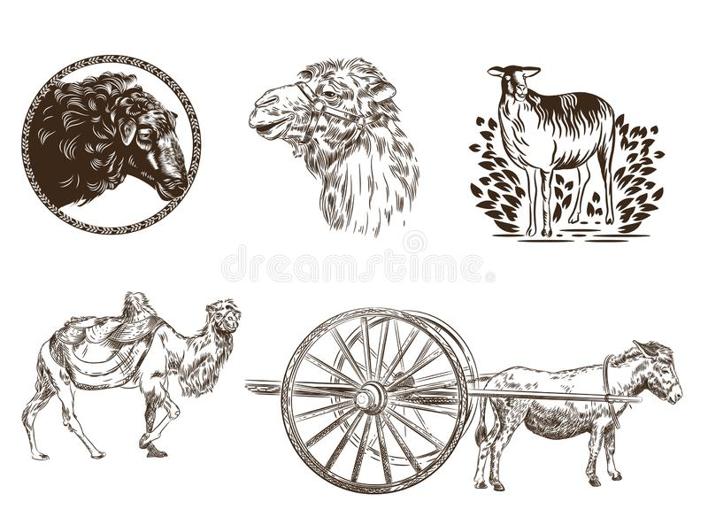 Set of images of animals. Camel, donkey, sheep. Livestock. vector illustration