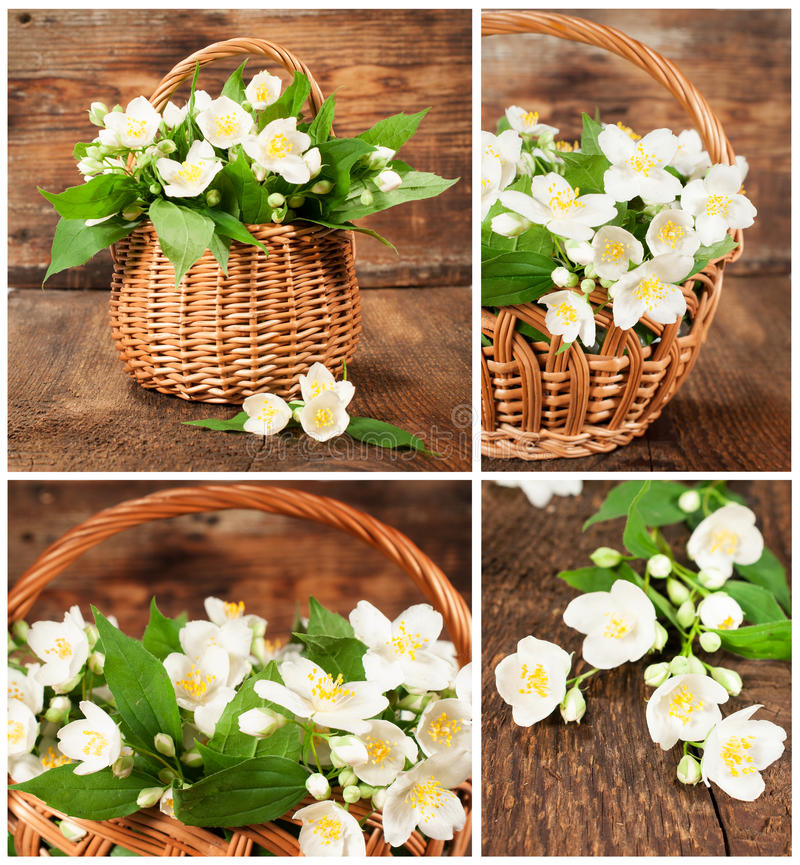 Download Set Of Images With Jasmine In Wicker Basket Stock Photo - Image: 31103102