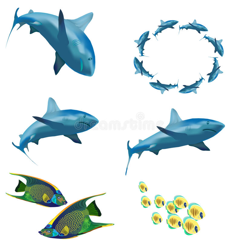 Download A set of images. Sea Life. stock vector. Image of animals - 21411585