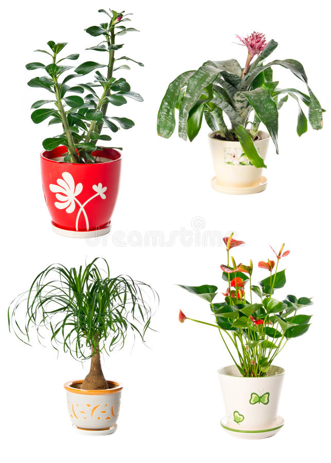 Download Set of indoor plants stock image. Image of stock, growing - 25154965