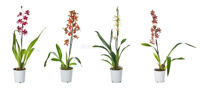 Download Set Of Indoor Plants In Flowerpots Stock Photo - Image: 20984034