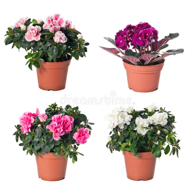Set Of Indoor Plants In Flowerpots Royalty Free Stock Photography