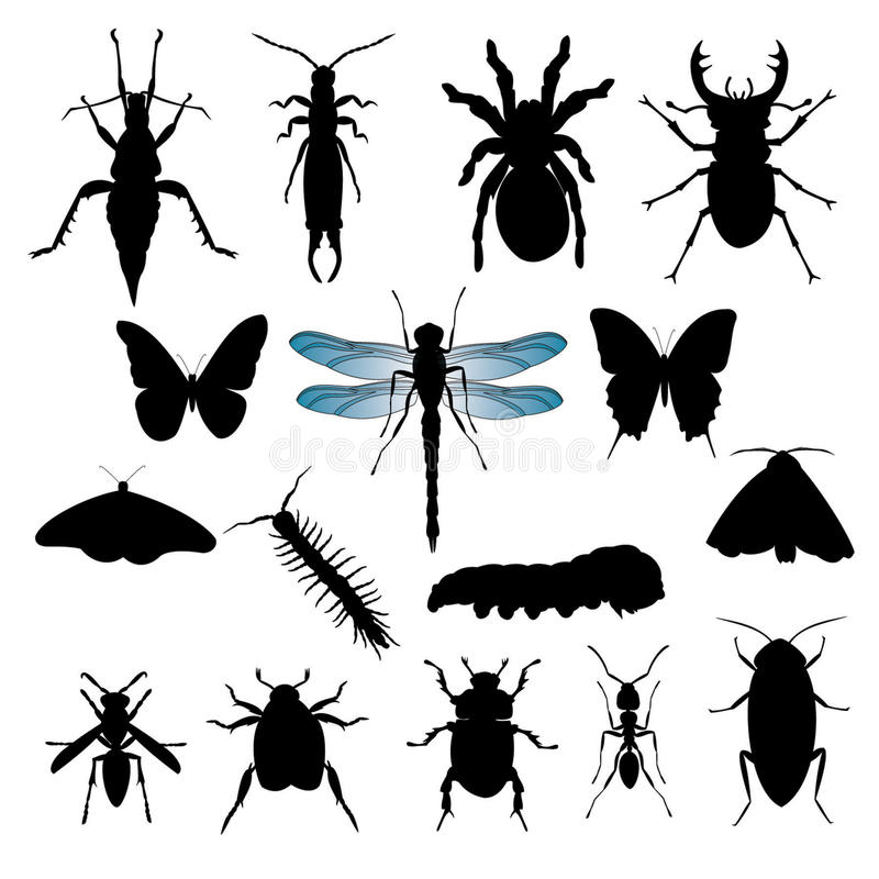 Set of Insect Silhouettes. 16 silhouette illustrations of insects with wing detail on dragonfly vector illustration