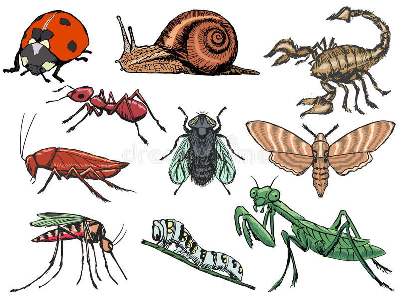 Set of insects stock illustration