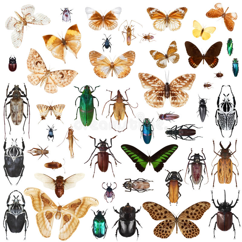 Set of insects royalty free stock photos