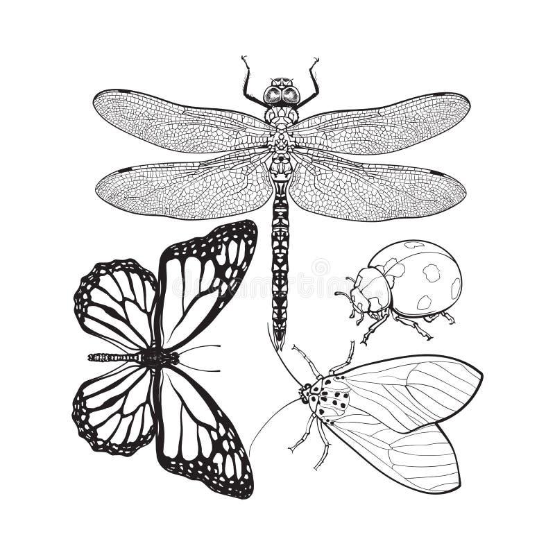 Set insekty lubi dragonfly, motyla, ladybird i ćma, royalty ilustracja