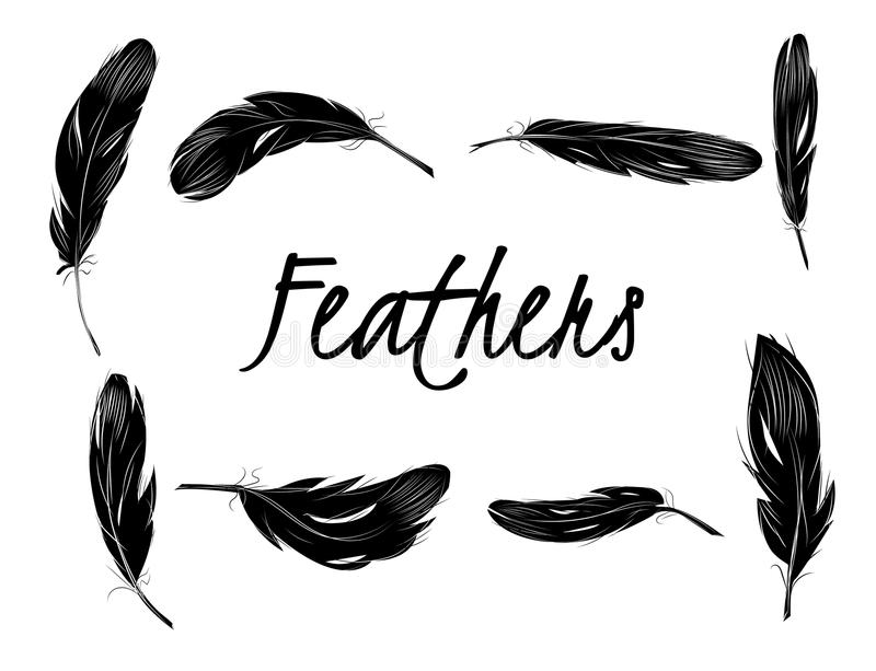 Set of isolated black feathers on transparent background vector illustration