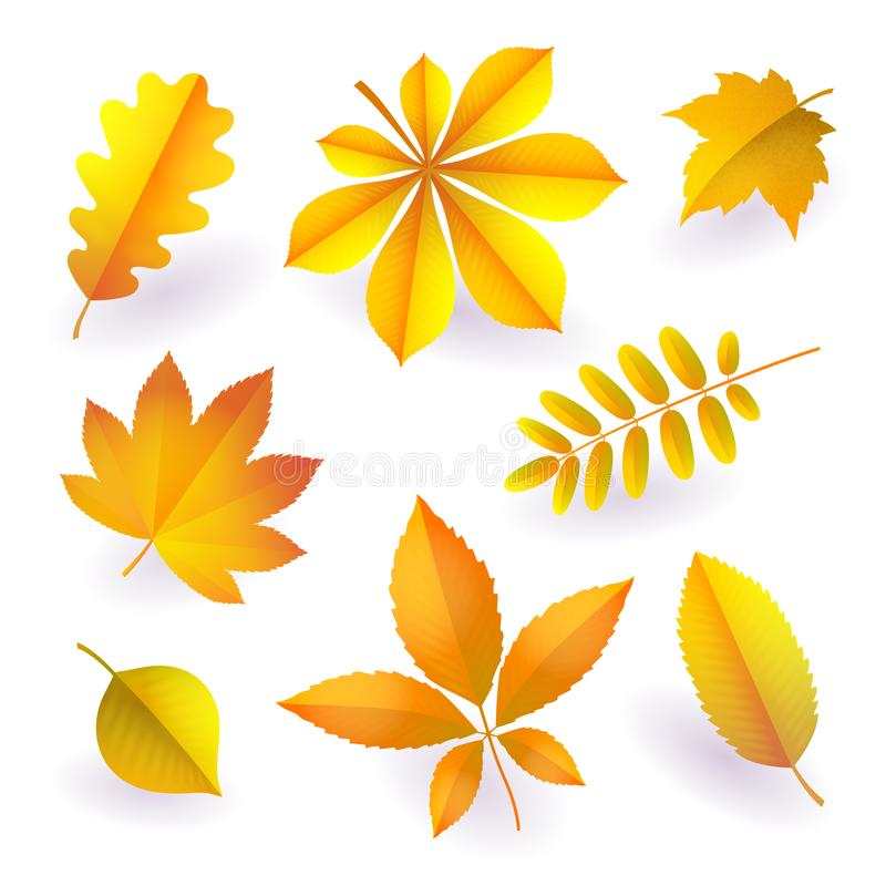 Set of isolated bright yellow autumn fallen leaves. Elements of fall foliage. Vector. Set of isolated bright yellow autumn fallen leaves. Elements of fall royalty free illustration