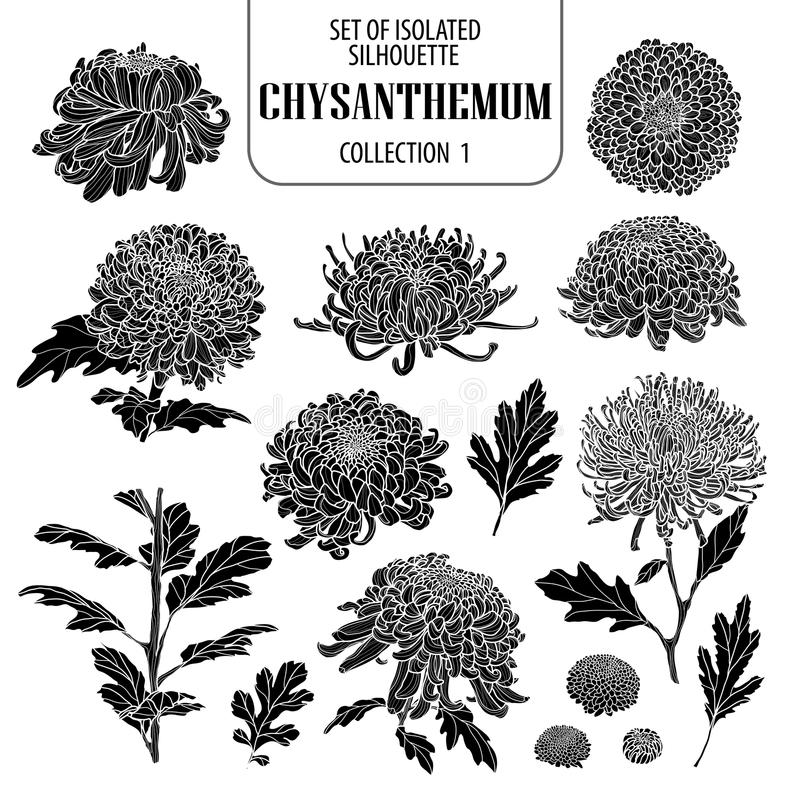 Set of isolated chrysanthemum collection 1. Cute flower illustration in hand drawn style. Silhouette on white background. stock illustration