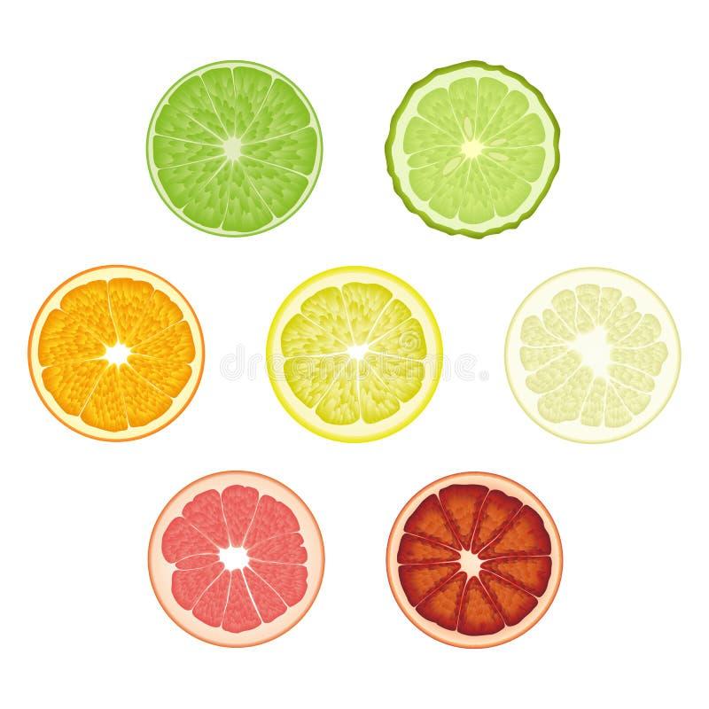 Set of isolated colored circle slices of bergamot, lime, lemon, orange, pomelo, bloody orange, pink grapefruit on white background. Realistic citrus fruit stock illustration