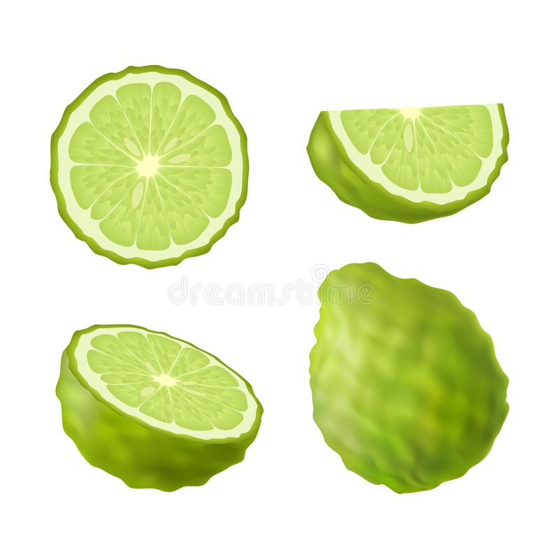 Set of isolated colored green bergamot, kaffir lime, half, slice, circle and whole juicy fruit on white background. Realistic citr vector illustration
