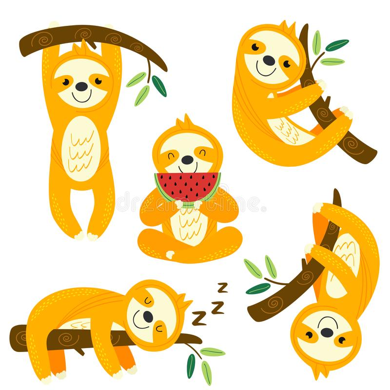 Set of isolated funny sloths. On a branch - vector illustration, eps vector illustration