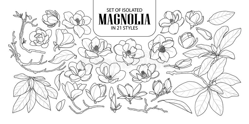 Set of isolated magnolia in 21 styles. Cute hand drawn flower vector illustration in black outline and white plane. stock illustration