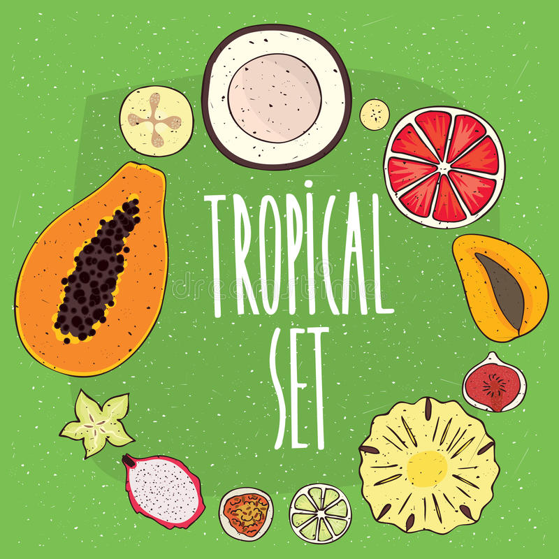 Set of isolated tropical fruits in cross sections royalty free illustration