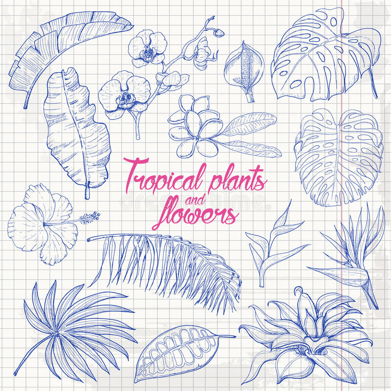 Set of isolated tropical plants and flowers on paper. Vector illustration for your design royalty free illustration