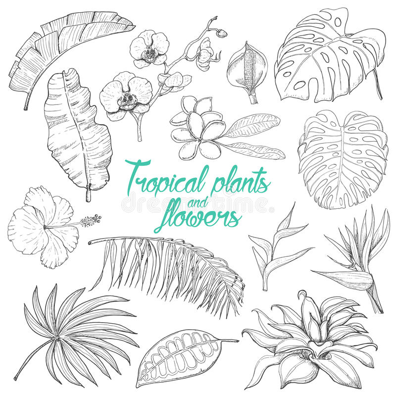 Set of isolated tropical plants and flowers. Vector illustration for your design vector illustration